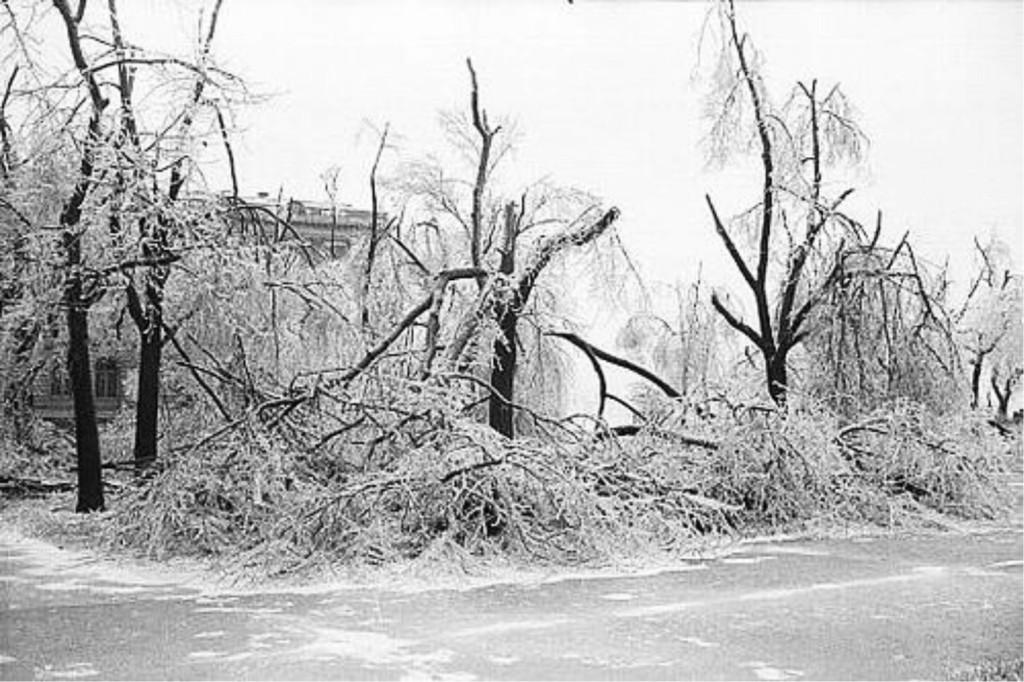 ice storm photo