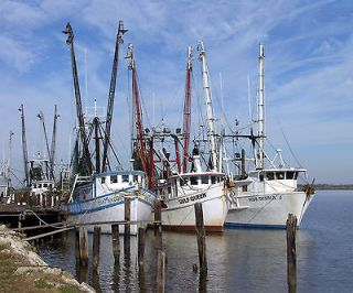 161167154_shrimp-boats-gulf-of-mexico-fishing-large-photo-picture